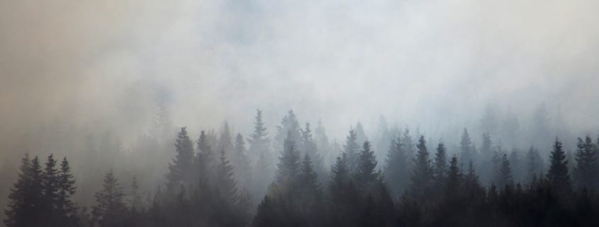 Forest enshrouded in wildfire smoke.