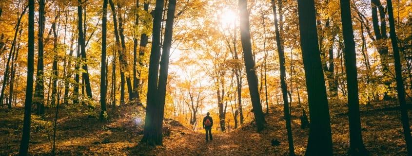 Hiker standing in autumn forest photo by Aaron Burden on Unsplash
